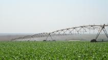 cartão de visita Engenharia agrícola: irrigação plantação e verde