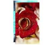 Visite meu cartão | Postal | Couchê fosco | 300g - 4X4 | 91mm x 153mm